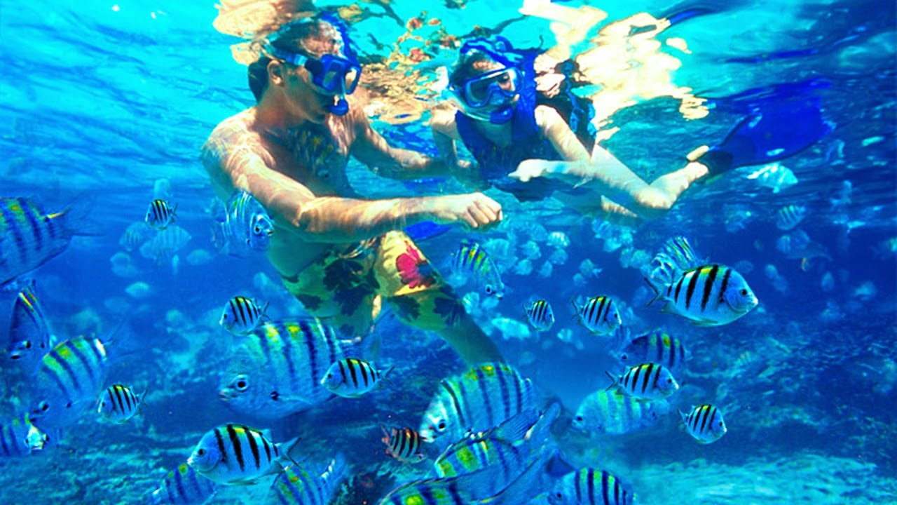 Snorkeling on Coral Island - Thailand