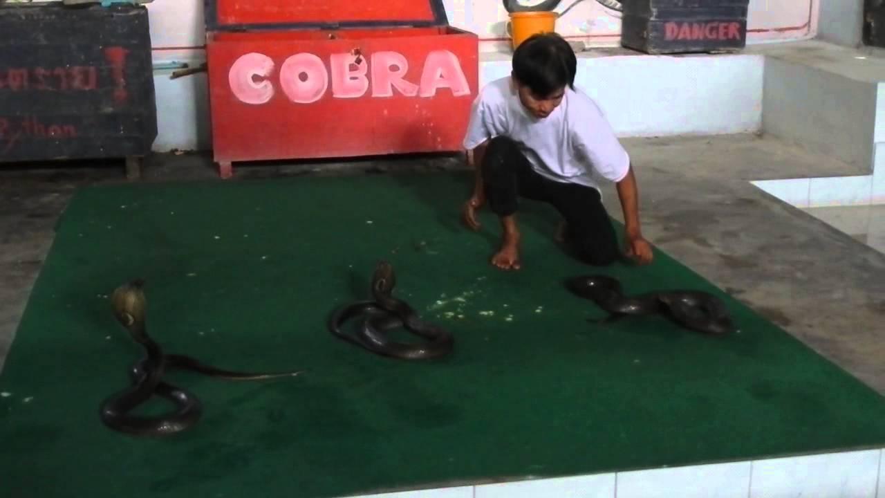 Koh Samui Snake Farm
