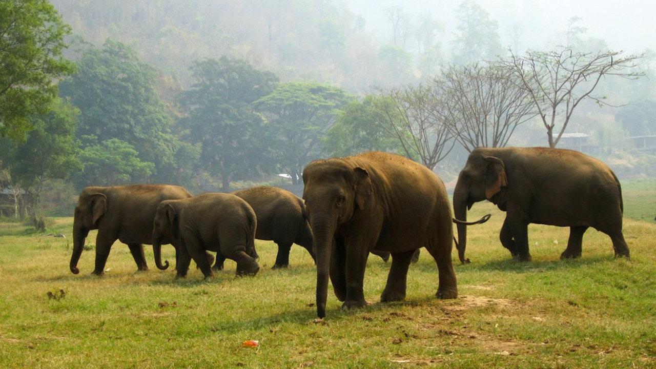 Volunteer at Elephant Park